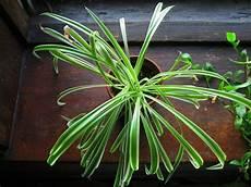 Nasa Forschung Offenbart Diese 17 Pflanzen Machen Die