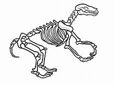 dinosaurs fossils coloring pages 16729 picture of a skeleton for free on clipartmag