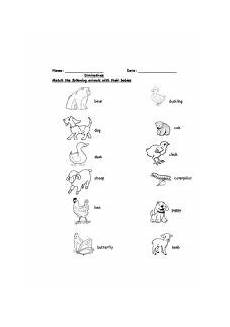 animals and their youngs worksheets 14094 worksheets diminutives ones