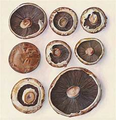 portabella mushrooms with images food illustrations stuffed portabella mushrooms food art