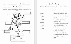 parts of a plant quiz 2nd grade science parts of a