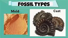 fossil types for beginners youtube
