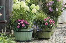 Associer Les G 233 Raniums Vivaces Promesse De Fleurs