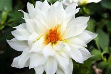 White Flowers Hd Images by Names Of White Flowers 30 Hd Wallpaper Hdflowerwallpaper