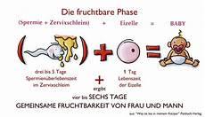 wann kann ich schwanger werden die fruchtbaren tage mfm deutschland e v