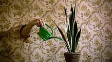 Luftreinigende Pflanzen Gute Luft Dank Pflanzen App 183 Dlf