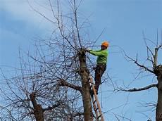 bäume schneiden bei str 228 ucher und b 228 ume schneiden stefan marti garten ag