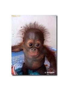 Gambar Lucu Monyet Apick Aw0x Z