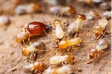 Can A Brick Home A Termite Infestation Arrow