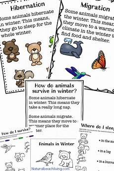 winter activities worksheets for preschoolers 19952 35 winter preschool themes and lesson plans living
