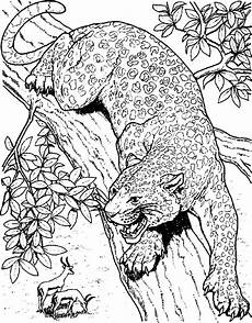Ausmalbilder Erwachsene Leopard Cheetah Printable Coloring Pages Coloring Home