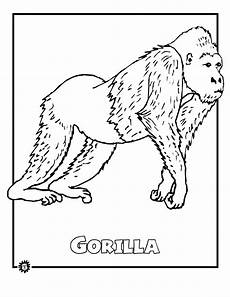 free coloring pages of animals in the rainforest 17397 gorilla colouring in rainforest study activities