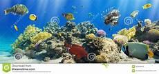 koralle und fische stockfoto bild tief exotisch