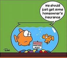 insurance knock knock jokes images