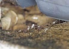 ameisen bek 228 mpfen natur verstehen und richtig handeln