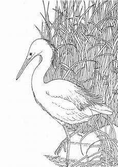 Aquarell Malvorlagen Tiere Tiere 9 Vogel Malvorlagen Ausmalbilder Tiere Ausmalbilder