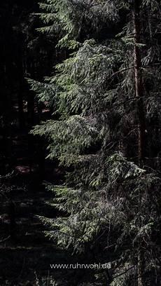 sprüche fürs wohnzimmer die 88 besten natur hintergrundbilder f 252 rs handy