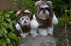 Wars Hund - can you guess which wars ewoks were based of