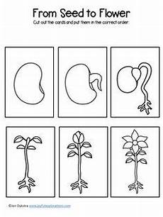 plants sequencing worksheets 13629 planting a flower sequencing activity sequencing activities preschool science sequencing cards