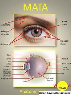 Pengertian Anatomi Dan Fisiologi Pada Indera Penglihatan