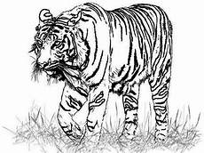 draw so animals coloring pages 17359 realistic sea coloring pages search tegning