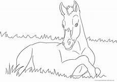 Ausmalbilder Pferde Fohlen Ausmalbilder Pferde Kinder Ausmalbilder