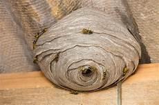 wespennest entfernen lassen kosten rafinovier