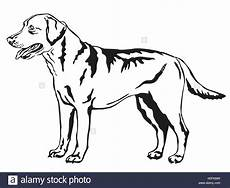 the best free labrador drawing images from 455