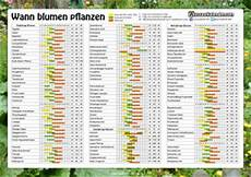Blumen Pflanzen Aussaatkalender