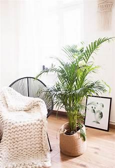zimmerpflanzen groß pflegeleicht 5 pflegeleichte zimmerpflanzen f 252 r euer zuhause
