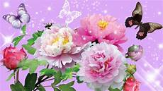 fiori e flower hd flower hd images wallpapers 3d pic photos