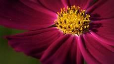 Flower Wallpaper Photo by Flowers Macro Hd Wallpapers