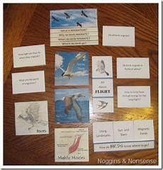 free apologia lapbook for flying creatures of the 5th day