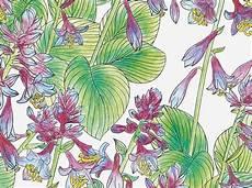 aquarell malvorlagen aquarell vorlagen zum ausdrucken wunderbar malvorlagen