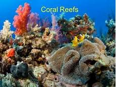 what are coral reefs how are they formed quora