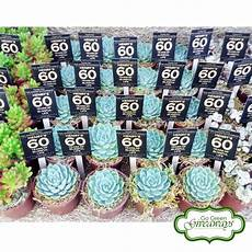 succulents giveaways for henry s 60th birthday bacolod philippines 60th birthday bacolod