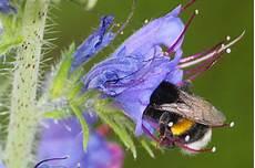 pflanzen für bienen und schmetterlinge wildblumen f 252 r insekten nabu hamburg