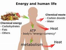 what is cellular respiration expii