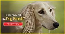 conosci a memoria tutte le conosci tutte le razze dei cani