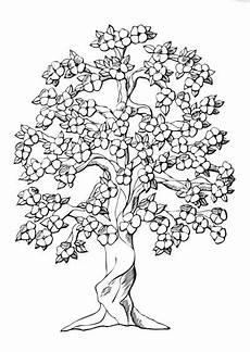 semeruco para colorear dibujo de 193 rbol en primavera dibujo para colorear de 193 rbol en primavera dibujos infantiles de