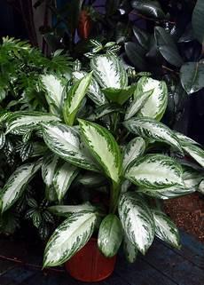 indoor plants low light hgtv
