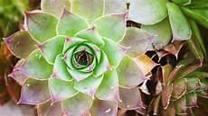 cactus flower iphone wallpaper cactus flower wallpaper iphone android desktop