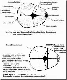 Ina Tiganna Fitria Natalina Anatomi Panggul