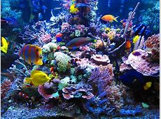 Flanary Coral reef