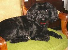 Photos de Fanfan, chienne Femelle Yorkshire terrier