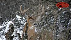 december 25 whitetail deer hunting best merry christmas cold snow ever youtube