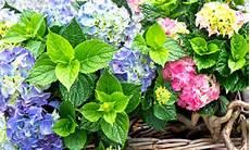 giardini in fiore foto fiori estivi per balconi e giardini colorati e vivaci leitv