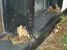 Morsches Holz Reparieren W 228 Rmed 228 Mmung Der W 228 Nde Malerei
