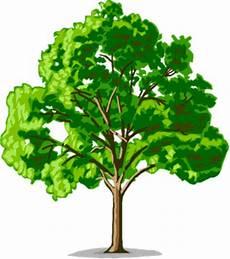 Arti Gambar Pohon Dalam Psikotes Design Hidupmu