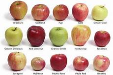 all about apples how to cooking tips recipetips